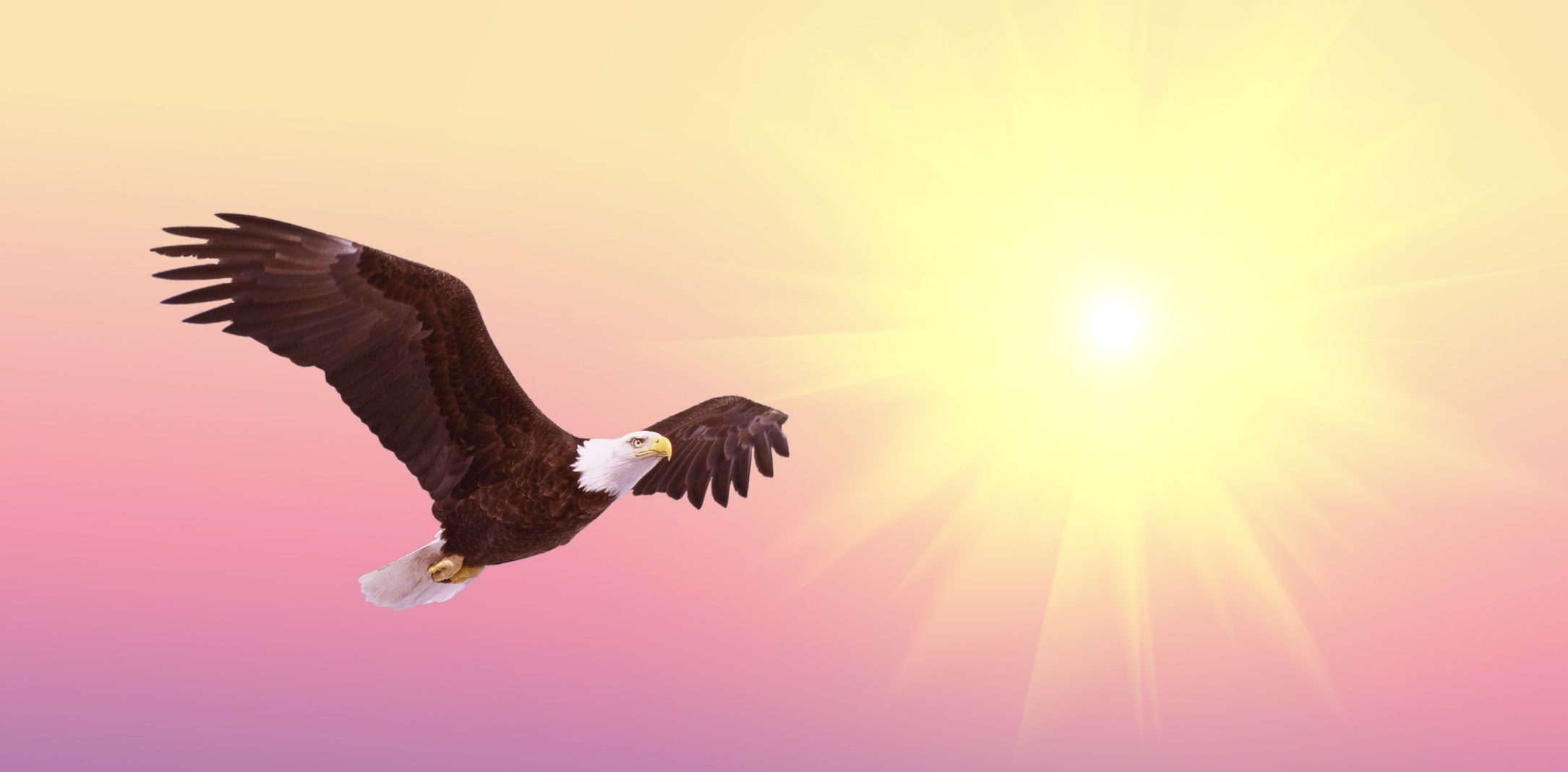 Adler fliegt neben strahlender Sonne als Symbol für das Hinauswachsen über sich selbst im Motto