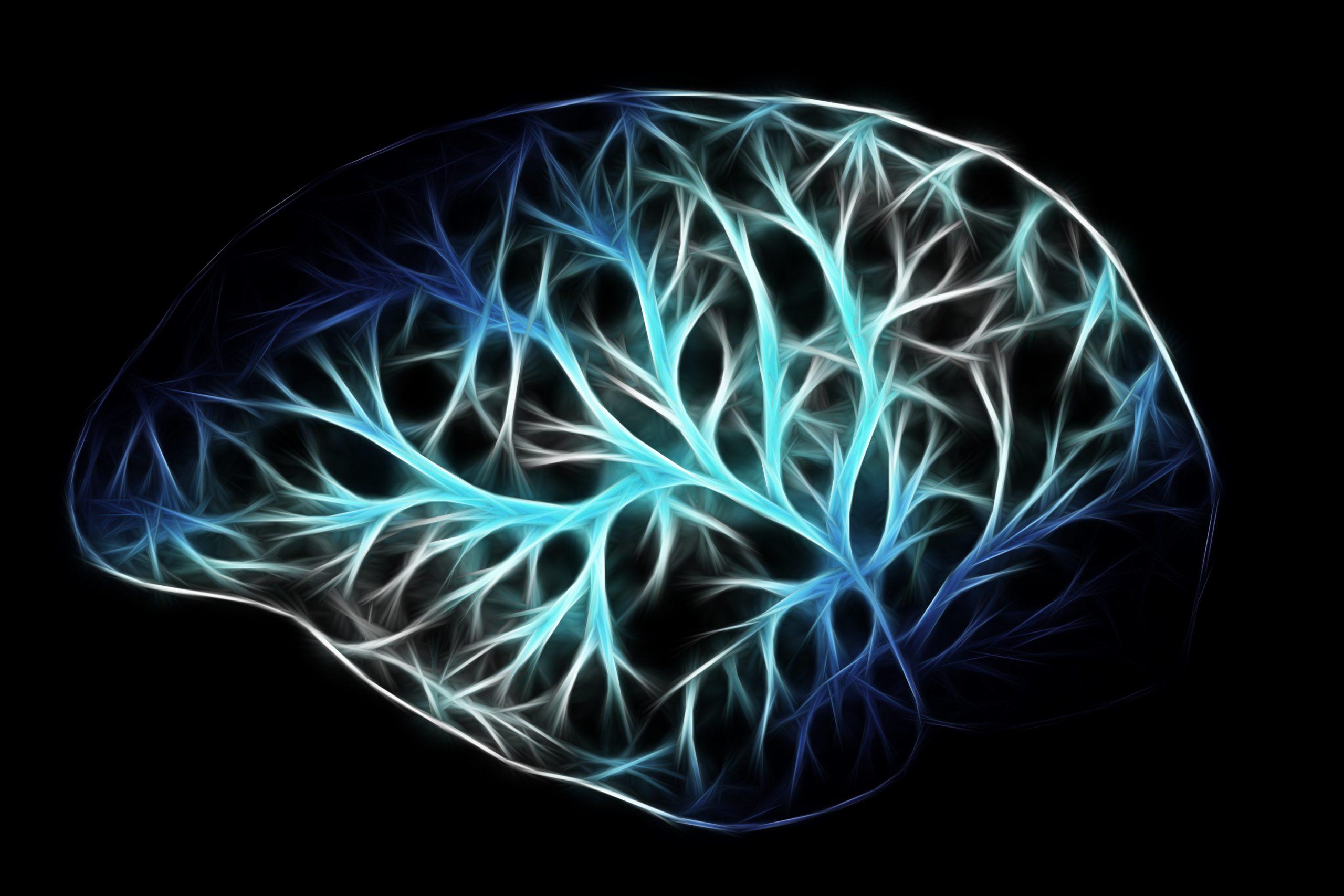 stilisierte Darstellung eines Gehirns zur Illustration der beschriebenen Vorgänge im Gehirn während der Hypnose