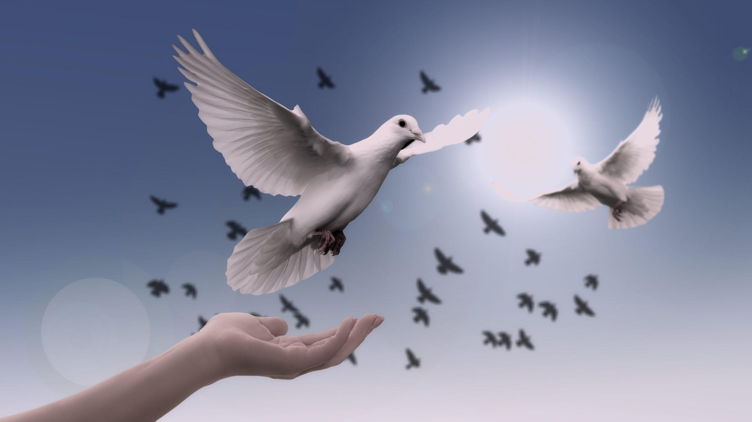 Von einer Hand auffliegende Taube und im Sonnenlicht kreisende Tauben als Symbol Freude, Kraft und Freiheit durch Ressourcenaktivierung und kreative Lösungen