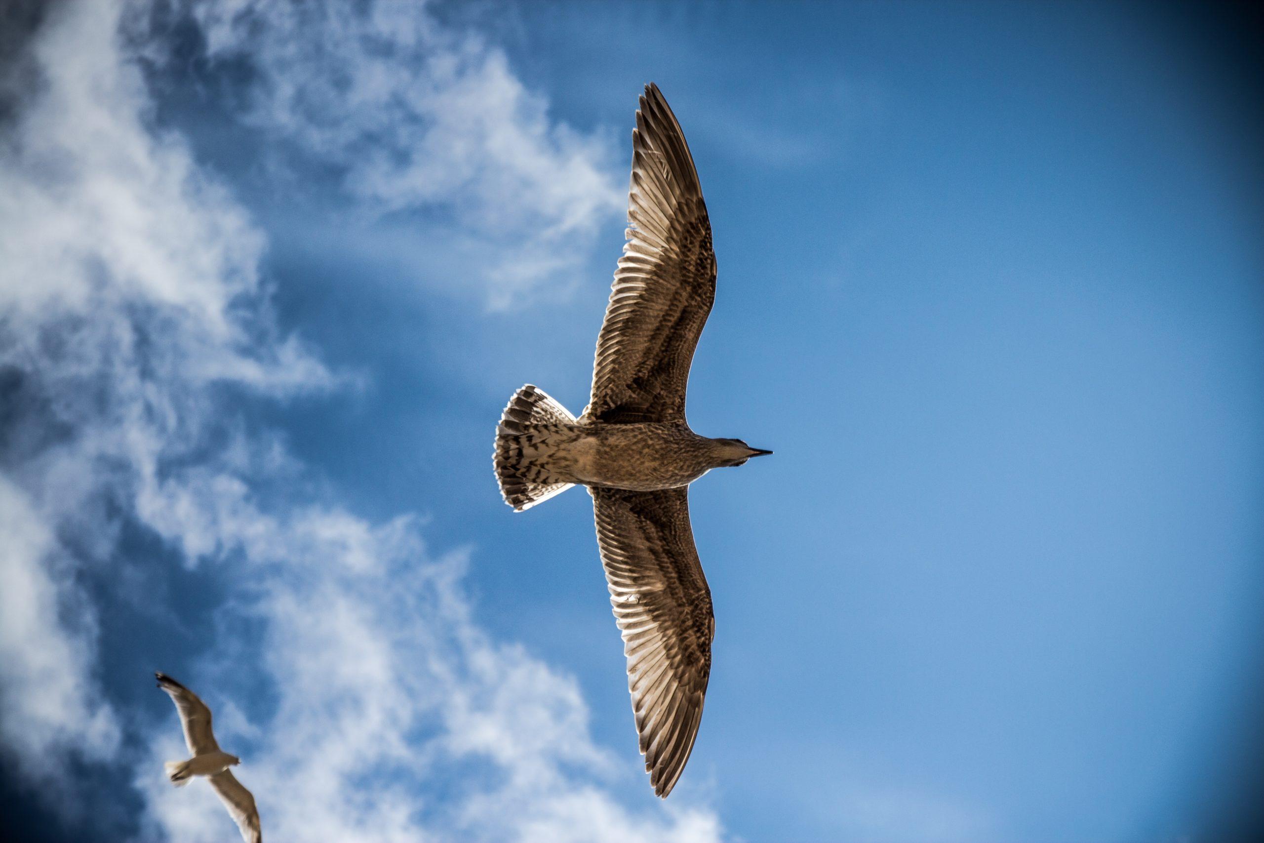 Blick von unten auf fliegende Möwen am blauen Himmel mit weißen Wölkchen als Symbol für die Befreiung, die durch Hypnose-Coaching erreicht werden kann